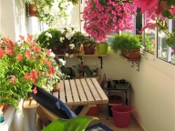 При грамотном размещении вазонов, даже на небольшом балконе можно сделать зимний сад