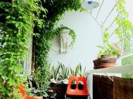 Вьющиеся растения со временем создадут затененные участки на открытом балконе